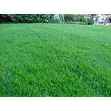 1 lb Grass/Lawn Seed - Kentucky Bluegrass, Ryegrass, Red Fescue, K31 Tall Fescue (Creeping Red Fescue)