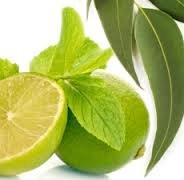 [Eucalyptus & Spearmint Fragrance Oil - 1/2oz 100% Pure Premium Grade Fragrance Oil Uncut] (Eucalyptus Spearmint Fragrance Oil)