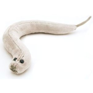 Giant Microbes C. Elegans (Caenorhabditis Elegans) Stuffed Plush Toy by Giant Microbes
