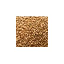 ALFALFA SEEDS (1KG) Brand: Sprout Master