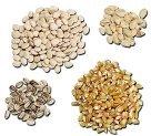 Frey Scientific Treated Sweet Corn Seeds, 0.5 - Corn Treated