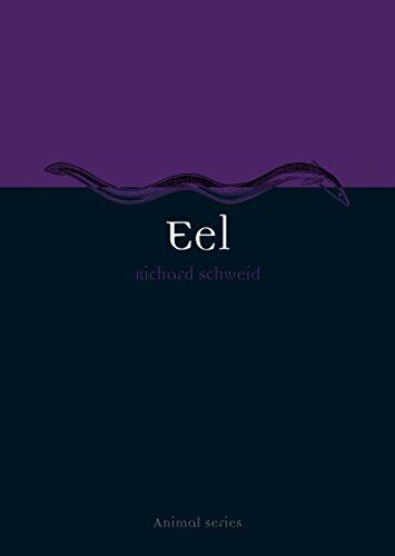 Eel (Animal)