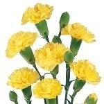 50 YELLOW CARNATION Caryophyllus Grenadin Flower Seeds *Comb S/H