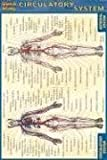 Circulatory System (Quickstudy) by Inc. BarCharts (2003-06-30)