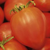 Tomato Amish Paste Garden Heirloom Vegetable 50 Seeds (Amish Paste Tomato Seeds)