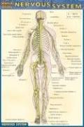 Nervous System (Quick Study: Nervous System)