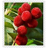 Hot Sale seeds arbutus bayberry family potted garden raspberry seeds planted fruit trees 10 / package