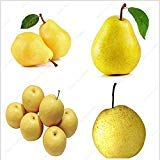 Bonsai Pear Seeds Mini Pear Tree Seeds Super Sweet Fruit Seeds Quality Potted Plants For Home Garden DIY 20 Pcs