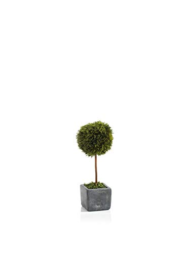 Zodax 10.25' Tall Cypress Round, Green and Gray...