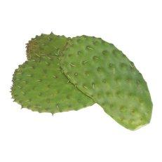 Cactus Leaves - Avg 10 Lb Case