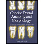 Concise Dental Anatomy & Morphology (4th, 01) by Fuller, Jim [Paperback (2001)]