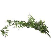 (Green Smilax Bush VineNew by: CC)