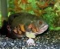 Oscar Hi Speed Undergravel Fish Aquarium Filter15 - 20 Gallon Tank