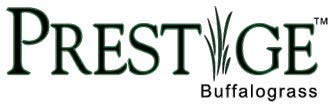 Prestige Buffalograss Plugs