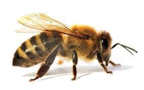 ARTOVIDA Premium Designer Beeswax Reusable Food Wraps   Biodegadable & Sustainable   Environment Friendly Plastic & Paper Free Food Storage   3 Sizes   Tobias Fonseca from Brazil - Nature Hive from Artovida