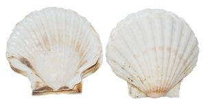 - Natural White Baking Irish Deep Dish Shells 11-12cm, 12 Pieces, Ireland
