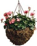 Braun Flat Bottom Hanging Basket, Welded Wire, Moss Liner (16-inch Diameter)