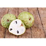 Cherimoya Chirimoya Annona Cherimola Custard Apple Seeds 10 PCS