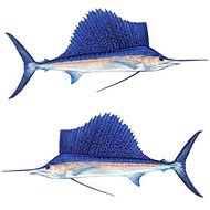 - Sailfish Decal Twin Pack
