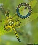 Dragonflies, Janet Halfmann, 1887068325