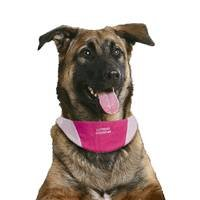 Cool It Dog Puppy Bandanna Small - Pink Clothing Clothes Cooling