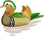 Duck Clip Art & Stock Photo Image CD