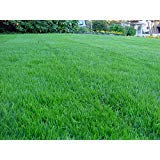 5 lb Grass/Lawn Seed - Kentucky Bluegrass, Ryegrass, Red Fescue, K31 Tall Fescue (fine-leafed Perennial ryegrass)