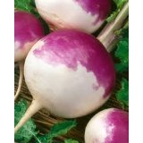 WHITE GLOBE PURPLE TOP TURNIP 1 LB