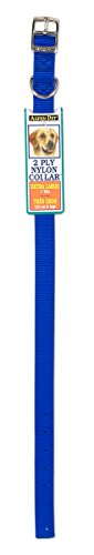 Petmate Aspen PET Products 21368 Nylon Dog Collar, 1 by 24-Inch, Blue