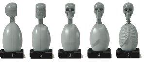 Artist Bust: Skeleton Torso Set by freedom-of-teach