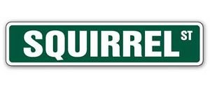 SQUIRREL Street Sticker xing crossing nuts gift roadkill hunt hunters shotgun stew