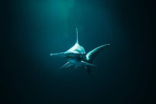 Home Comforts Laminated Poster Closeup Photo of Hammerhead Shark Vivid Imagery Poster Print 24 x 36
