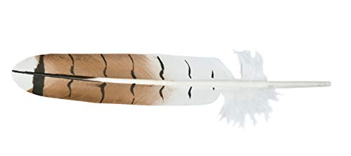 Red-Tail Hawk Single Feather (Imitation)
