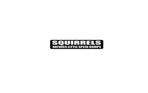 Squirrels Nature's Little Speed Bump Helmet Stickers - Novelty Decals, 4