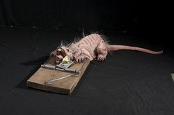 Rat Trap Halloween Costume (Giant Rat Trap Animated 4ft Prop)
