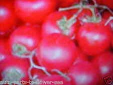 Organic Miniature Hanging Basket RED Cherry Tomato Seeds. Indoor/Outdoor Patio (Best Cherry Tomatoes For Hanging Baskets)