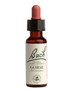 Gorse 20 ml (Ulex europaeus) - Bach Flower Essences