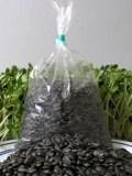 "Organic Unshelled Sunflower Seed- Pre-Measured for a 10""x20"" Growing Tray - Non-GMO Black Oil Sun Flower Seeds for Sprouts, Microgreens, More 1 Certified Organic Black Oil Sunflower Sprouting Seeds High Germination Rate - Microbial Tested Perfect for Growing Sprouts, Microgreens, Food Storage, Vegetable Garden & more"