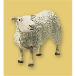 Sheep Costumes For Sale (Sheep)