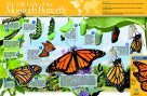 Neo Sci 35 W x 23 H in. Monarch Butterfly Life Cycle Laminated Poster44; Grade 6-12