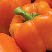 Orange Sun Pepper - 20 Seeds - Solar Orange by Hirts: Seed; Pepper