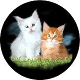 Cat Gift Box Set of 4 Welsh Slate Coasters