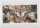 Swallowtail (Trading Card) 1983 Grandee British Butterflies - [Base] #30 ()