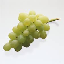 (1 Gallon Plant) Thompson Seedless White Grape Vine Shrub, Excellent Mid-Season Table Grape Variety, Pixies Gardens 171103893258