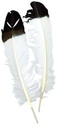 - Bulk Buy: Zucker Feather Imitation Eagle Quill 2/Pkg White With Black Tip B702-IE (6-Pack)