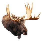 Moose Outdoor Wall - Next Innovations Metal Wall Art Decor Moose Head Wall Art