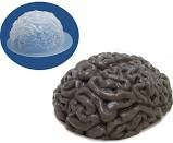 Cheap Halloween Scene Setters (Halloween Plastic Brain Gelatin Mold Standard Fall Tray for Jello Chocolate Zombie Mad Science Theme Party Parties by nknown)