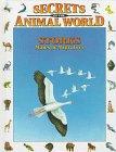 (Storks: Majestic Migrators (Secrets of the Animal World))