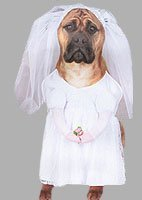 Bride Pet Costume (Small) by Extreme Halloween