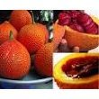 10 Gac fruit Seeds (Southeast Asian fruit) \